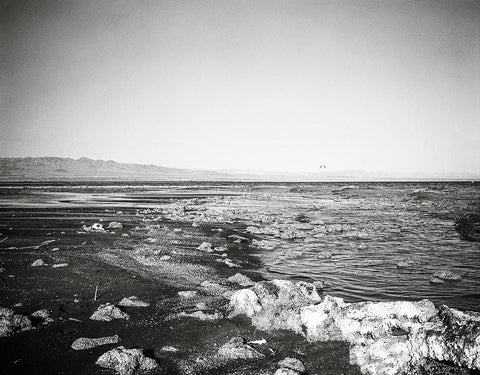 Salton Sea Beach, Black and White Film Photography Lost Kat Photography