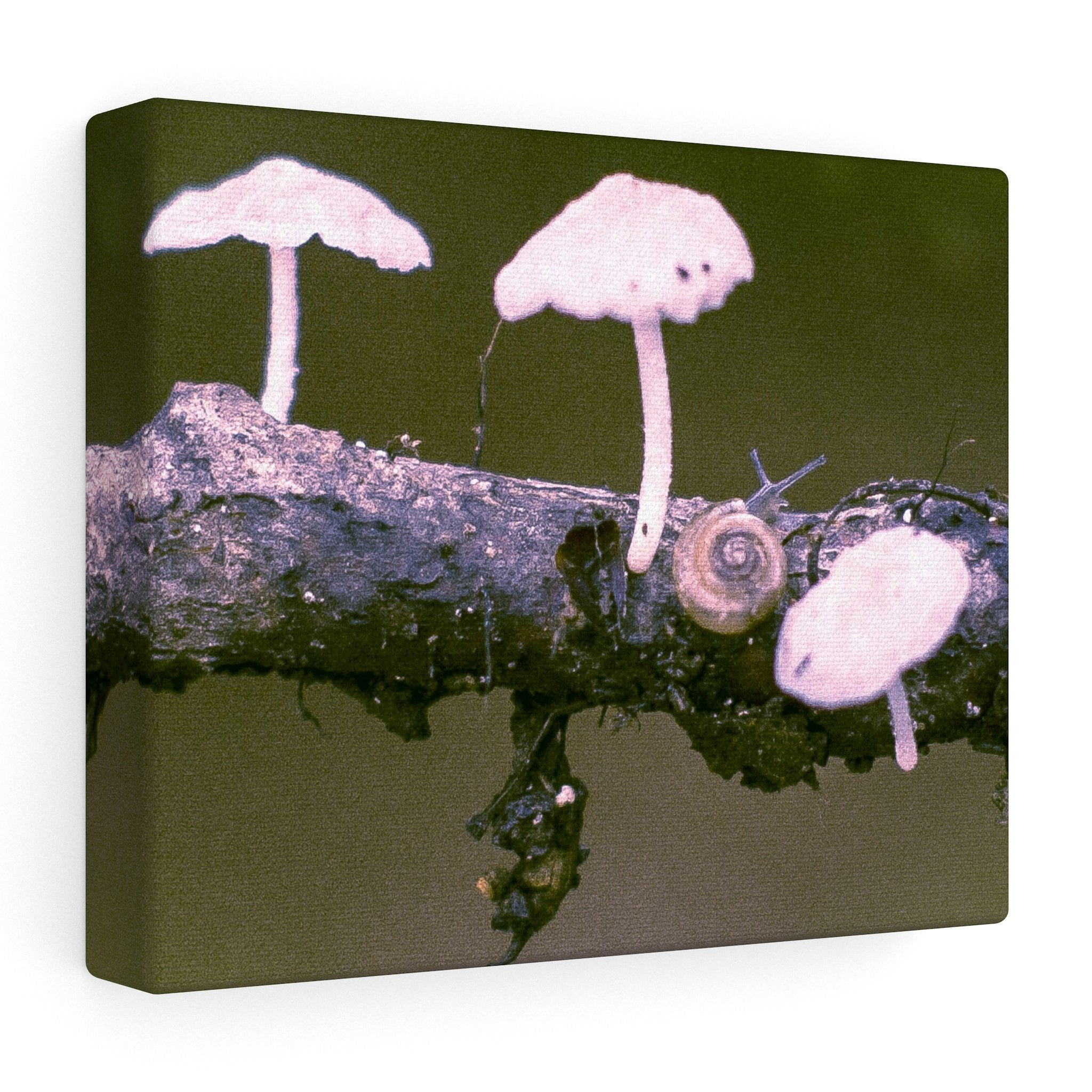 Snail on a Log Stretched canvas 10″ × 8″ / Stretched Canvas (1.5