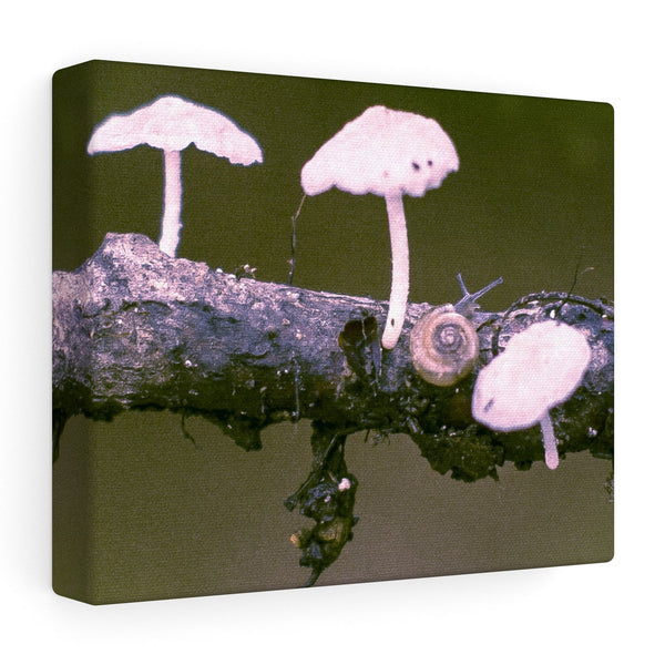 "Snail on a Log Stretched canvas 10″ × 8″ / Stretched Canvas (1.5"") Printify"