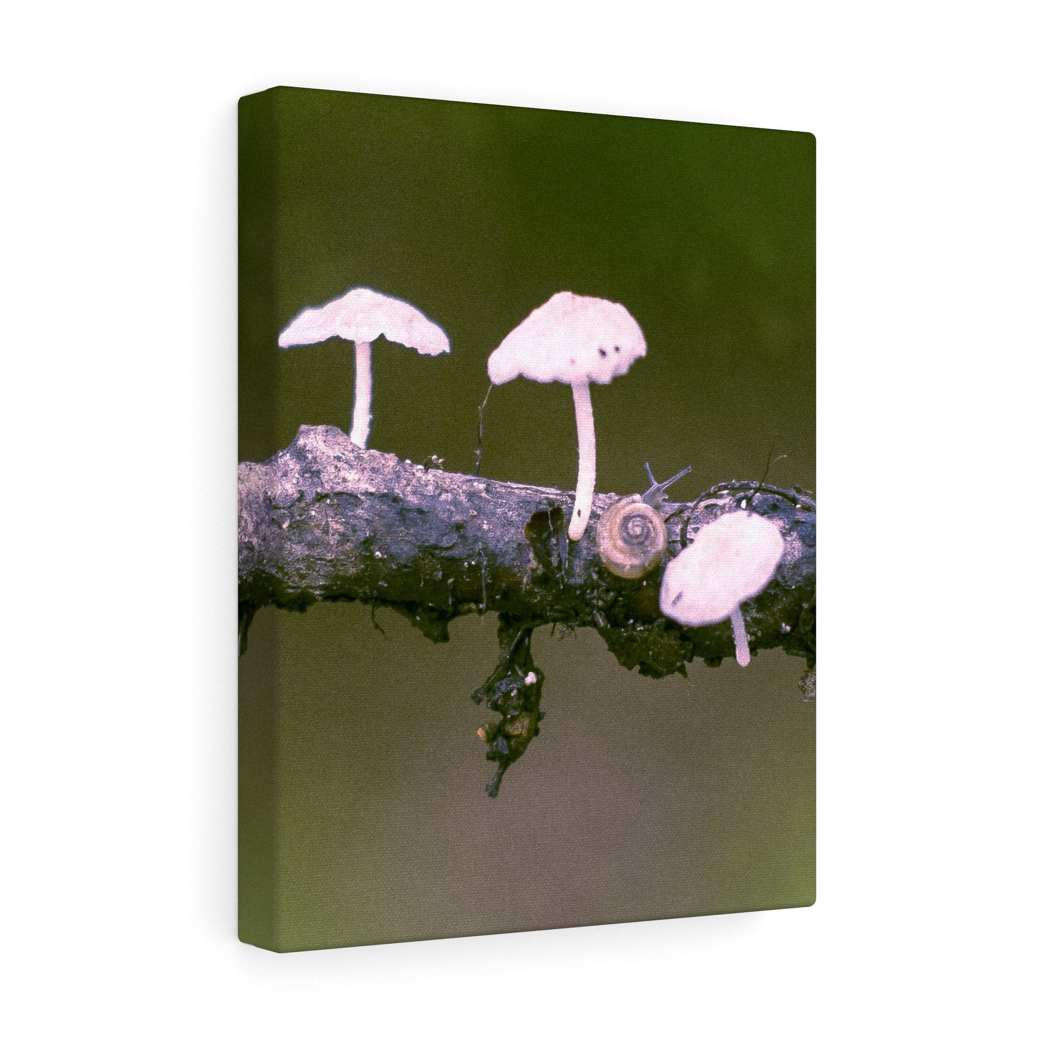 Snail on a Log Stretched canvas 11″ × 14″ / Stretched Canvas (1.5