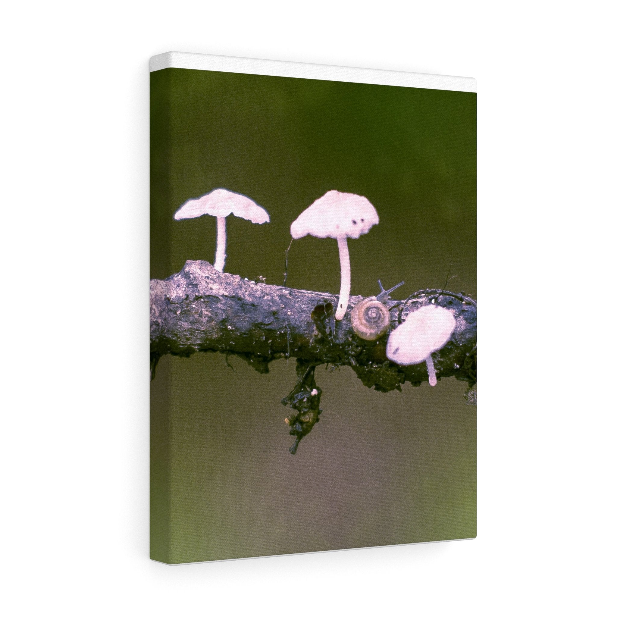 Snail on a Log Stretched canvas 12″ × 16″ / Stretched Canvas (1.5