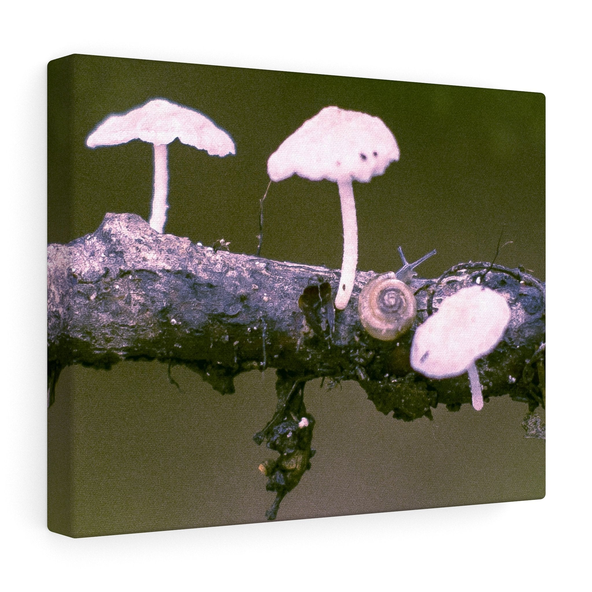 Snail on a Log Stretched canvas 14″ × 11″ / Stretched Canvas (1.5