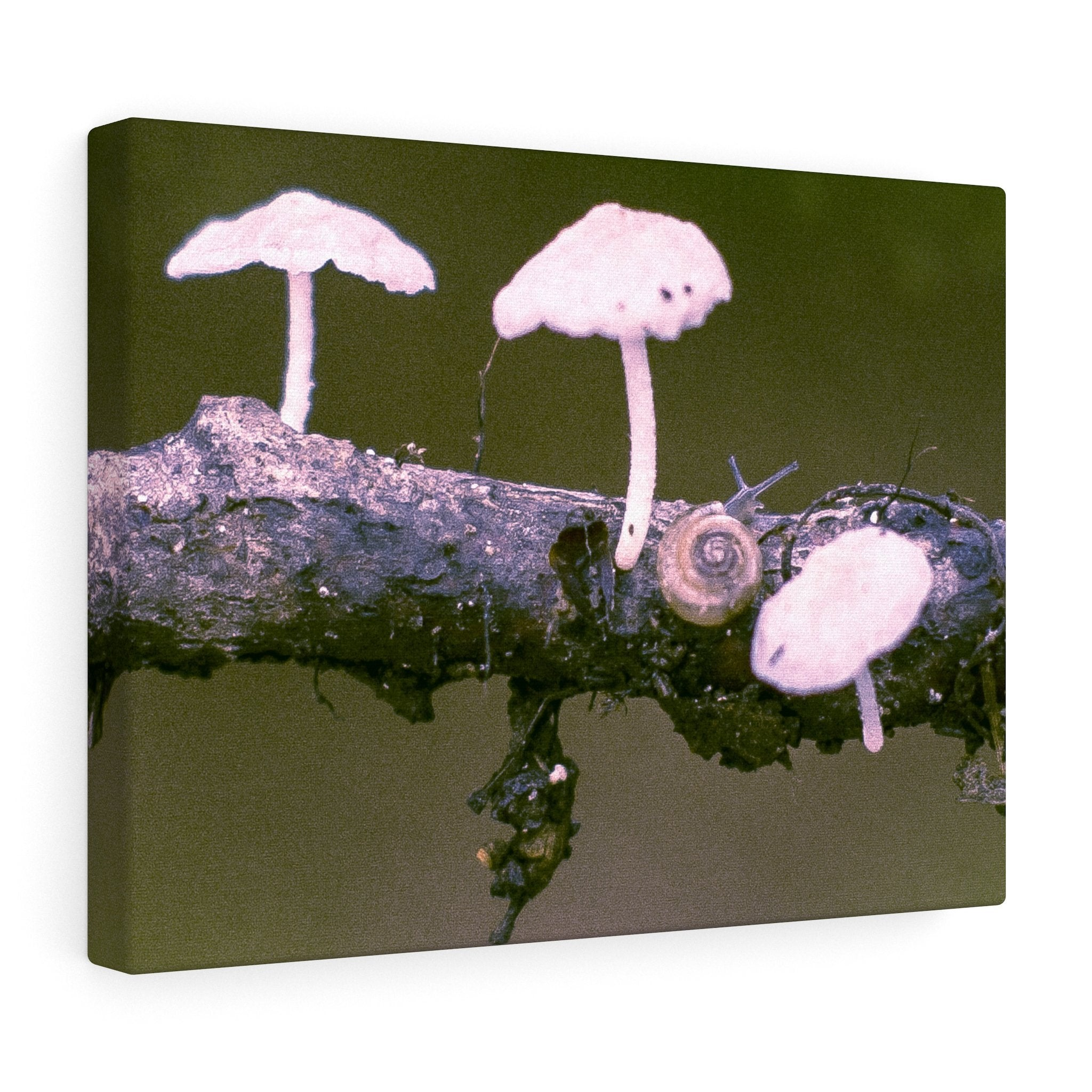 Snail on a Log Stretched canvas 16″ × 12″ / Stretched Canvas (1.5