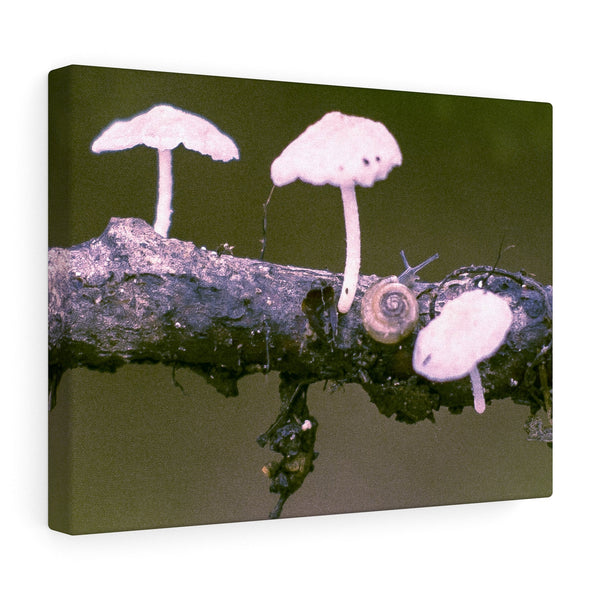 "Snail on a Log Stretched canvas 16″ × 12″ / Stretched Canvas (1.5"") Printify"