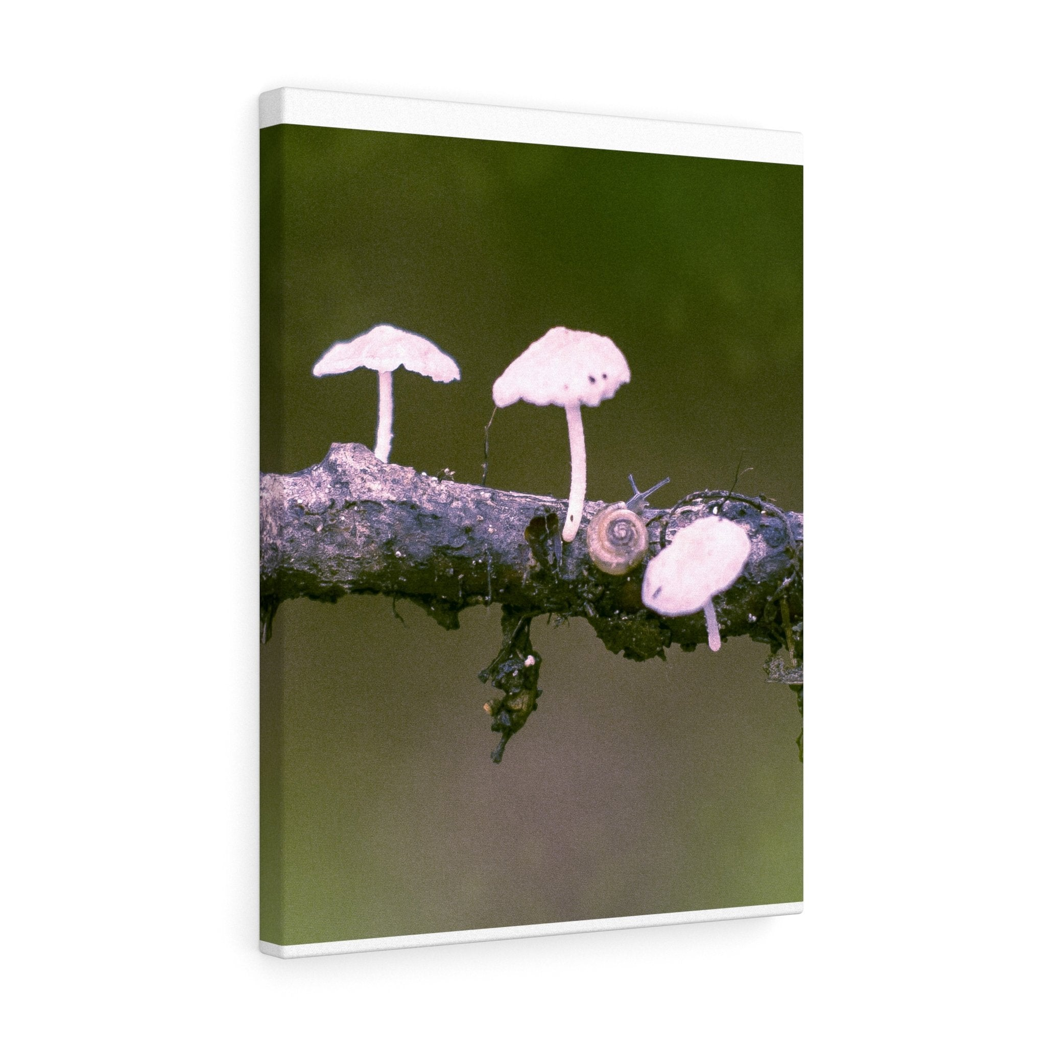 Snail on a Log Stretched canvas 18″ × 24″ / Stretched Canvas (1.5