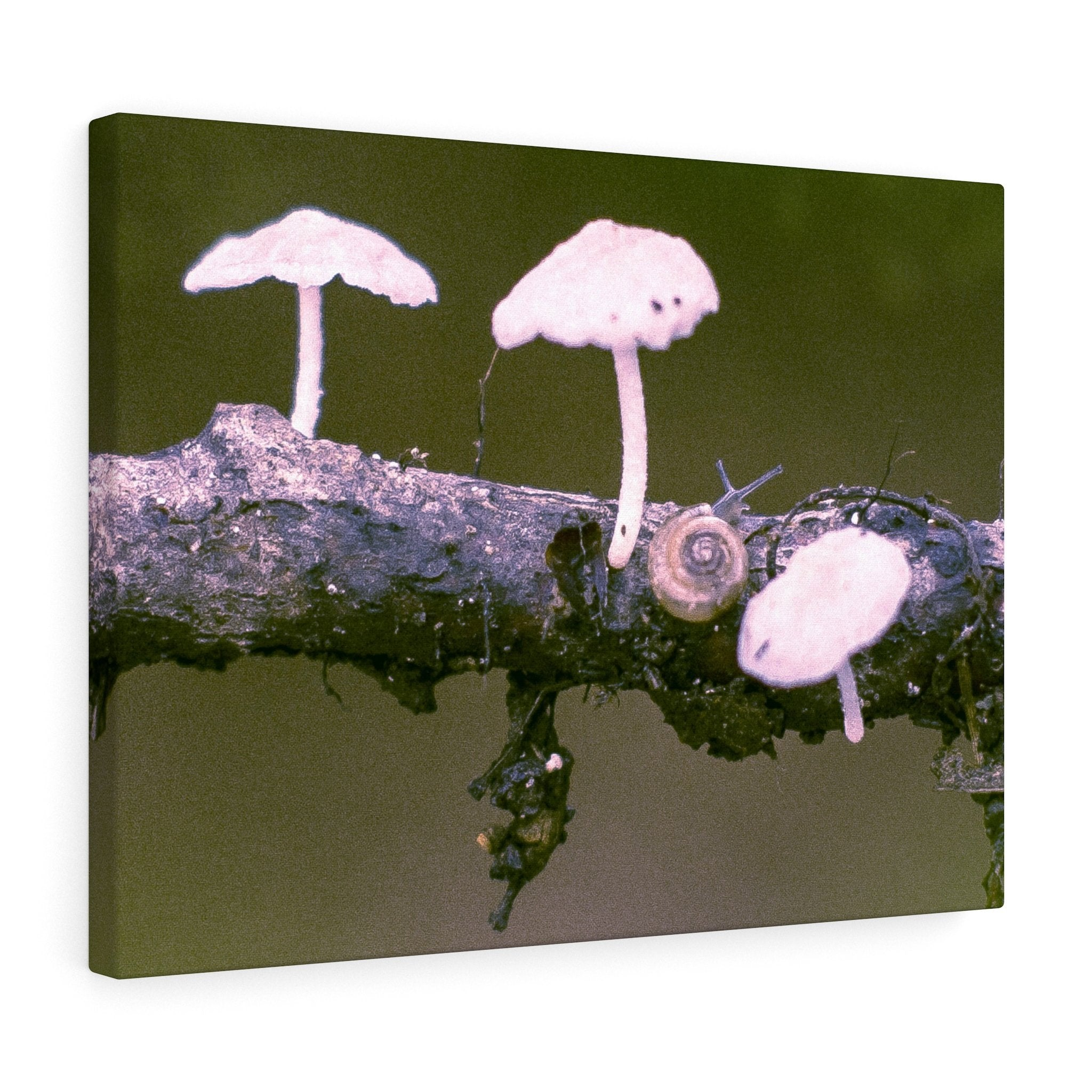 Snail on a Log Stretched canvas 24″ × 18″ / Stretched Canvas (1.5