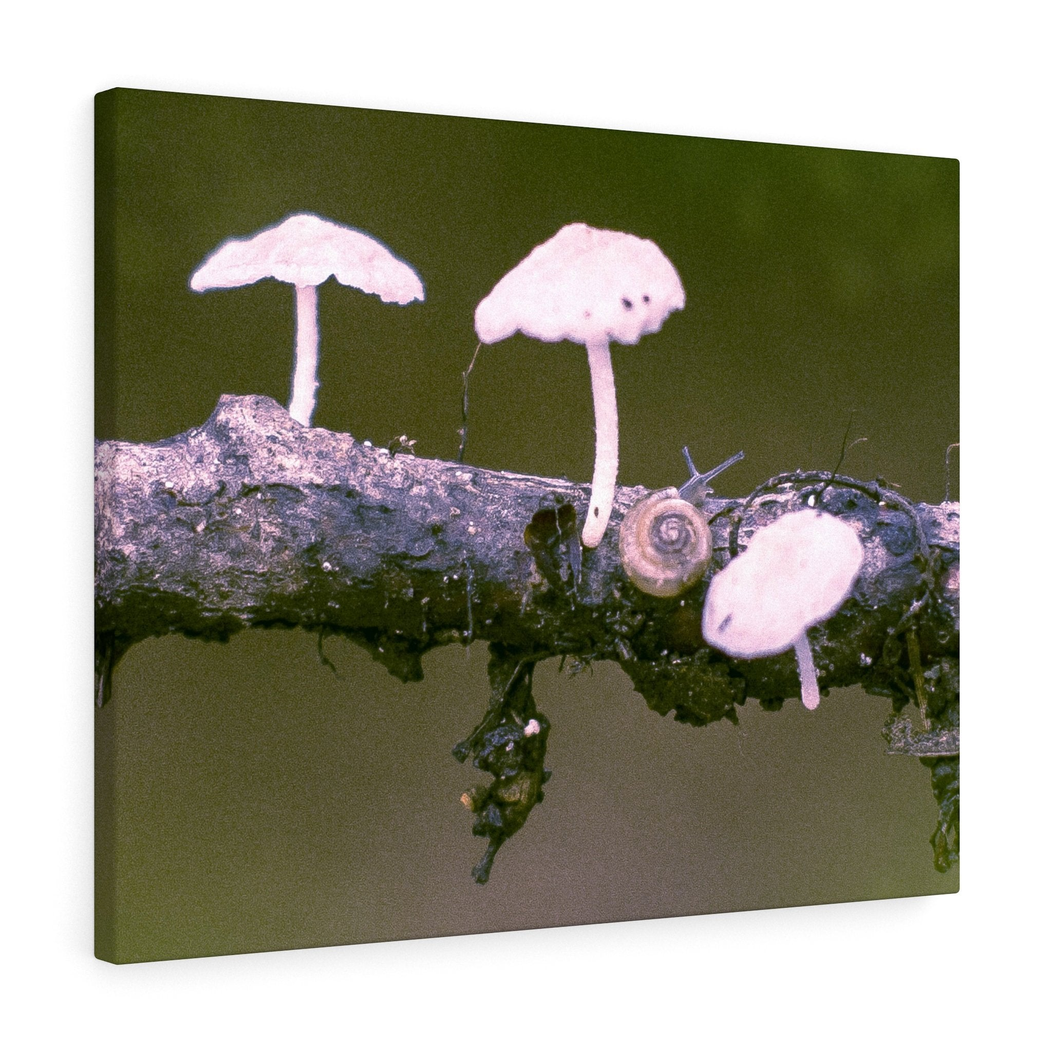 Snail on a Log Stretched canvas 30″ × 24″ / Stretched Canvas (1.5
