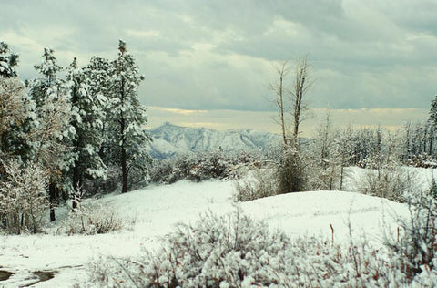 Snowy Forest Scene, San Juan Mountains, Colorado Fine Art Print Lost Kat Photography