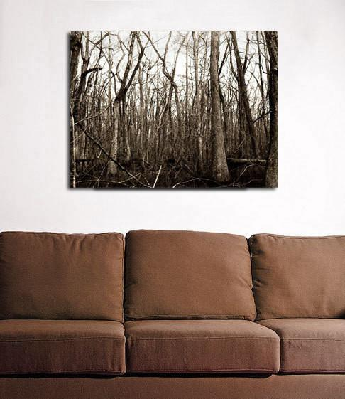 Swamp Trees, Louisiana Forest Fine Art Print Lost Kat Photography