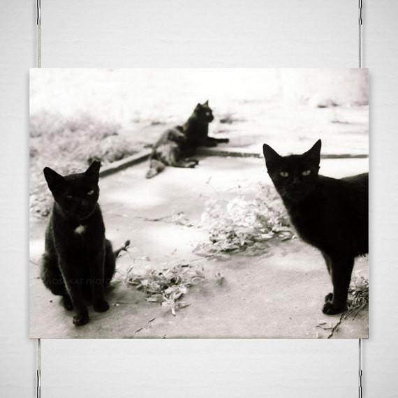 Three Black Cats, Black and White Photography Lost Kat Photography
