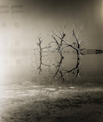 Three Trees, Salton Sea, Black and White Surreal Photography Lost Kat Photography