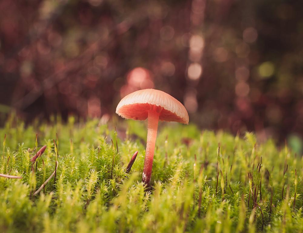 Tiny Mushroom, Fine Art Print Lost Kat Photography