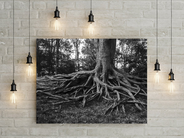 Gnarled Three Roots Black and White Wall Art Print - Many Sizes