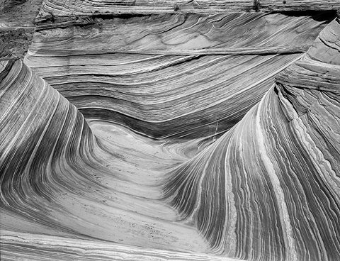 The Wave, Arizona Black and White Photo