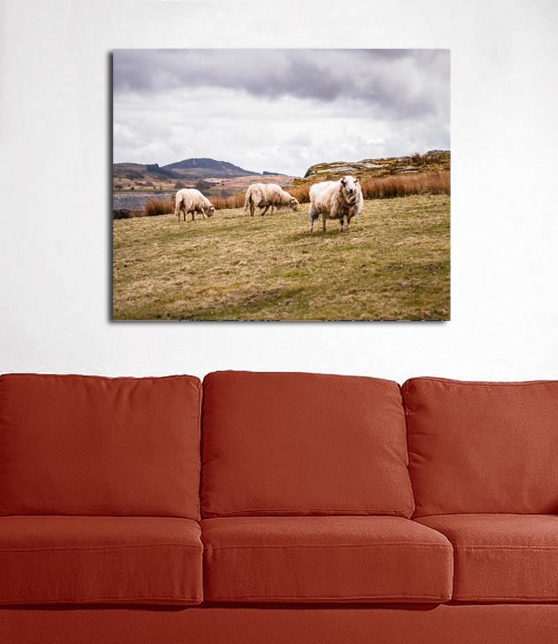 Welsh Sheep in Snowdonia, Fine Art Photography Lost Kat Photography