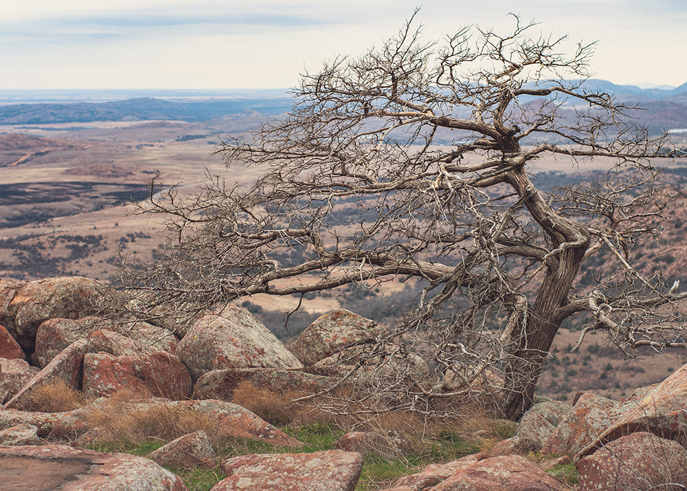 Wichita Mountains Tree, Mt. Scott, Oklahoma Photo Print