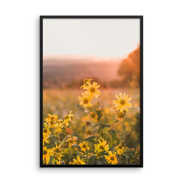 Yellow Aster Flowers at Sunset - Framed Photo Print 12×18 Lost Kat Photography
