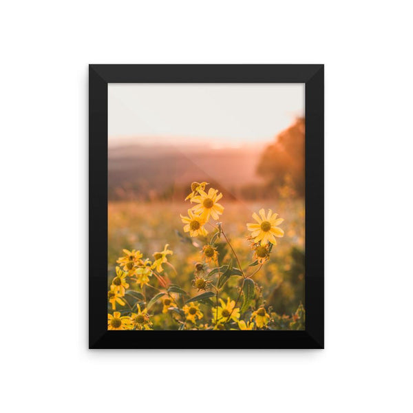 Yellow Aster Flowers at Sunset - Framed Photo Print 8×10 Lost Kat Photography
