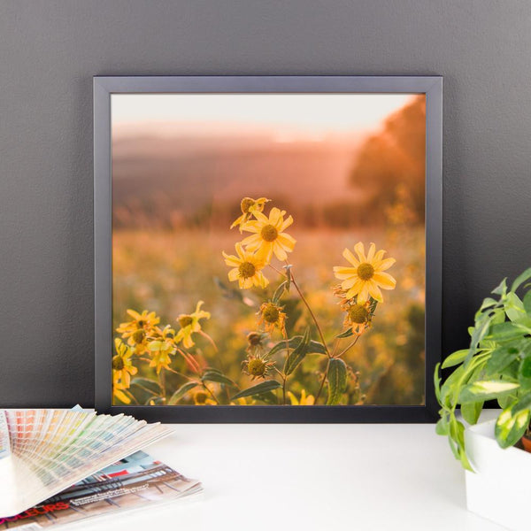 Yellow Aster Flowers at Sunset - Framed Photo Print Lost Kat Photography