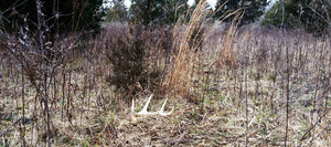 How to Be Successful Finding Deer Sheds