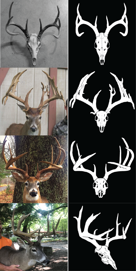 Deer head angles before and after custom decal