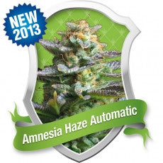 Amnesia Haze Automatic Feminised Seeds - BITCOINSEEDSHOP