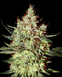 K-Train Feminised Seeds - BITCOINSEEDSHOP - 2