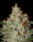 Lemon Skunk Feminised Seeds - BITCOINSEEDSHOP - 2