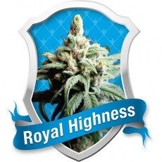 Royal Highness Feminised Seeds - BITCOINSEEDSHOP - 1