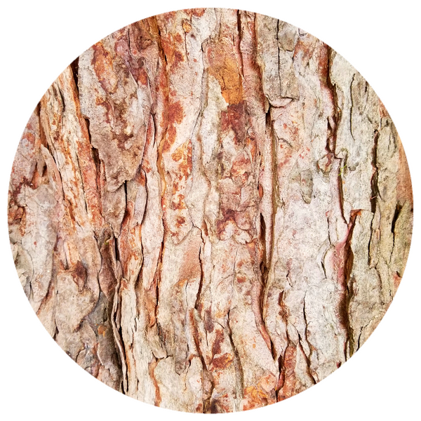 Cedarwood, Atlas (Cedrus atlantica) Organic Essential Oil