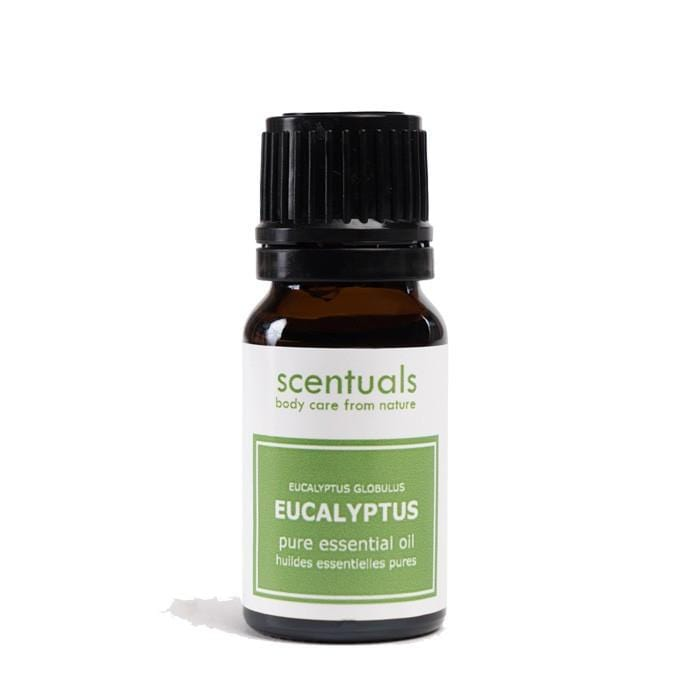 SCENTUALS Essential Oil Eucalyptus