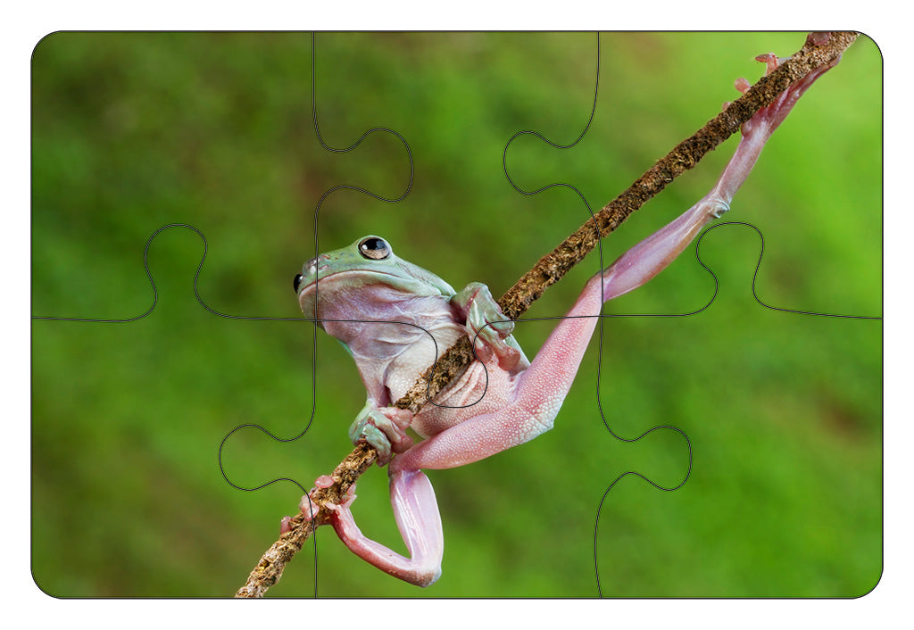 JIGSAW COASTERS Green Tree Frog 6pc