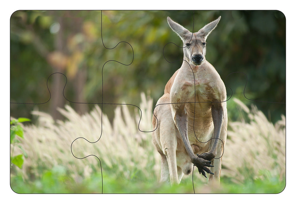 JIGSAW COASTERS Kangaroo 6pc