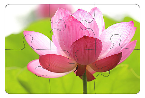 JIGSAW COASTERS Lotus Flower 6pc