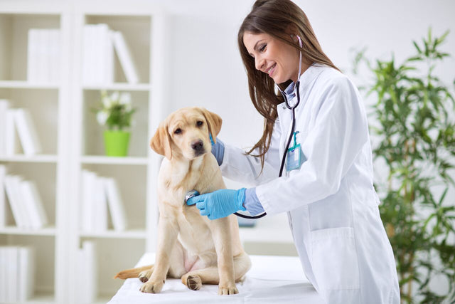 InterAktiv-Vet for equipment, products and clinic furniture used in the veterinary clinic, Consulting tables, Pulse Oximetry, Ultrasound Machines, Syringe and Infusion pumps, Examination Lights, Diagnostic Instruments
