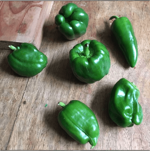 Bell peppers from Bauko, Mt Province
