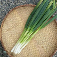 Onion leeks from Bauko, Mt Province