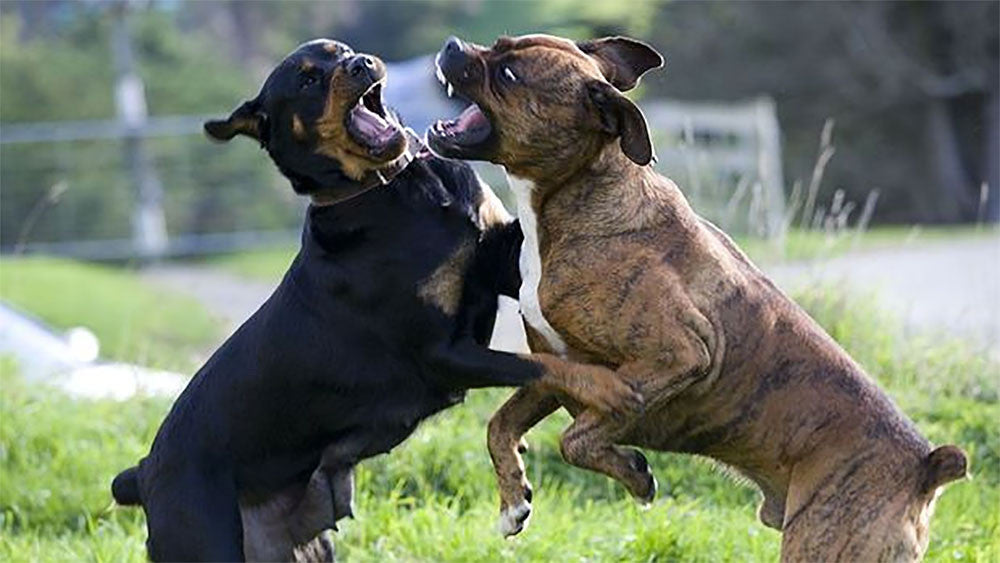 What To Do When Another Dog Attacks Your Dog