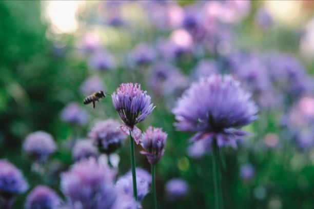 How To Create A Bee-Friendly Garden This Spring