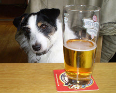 alcohol is dangerous for dogs