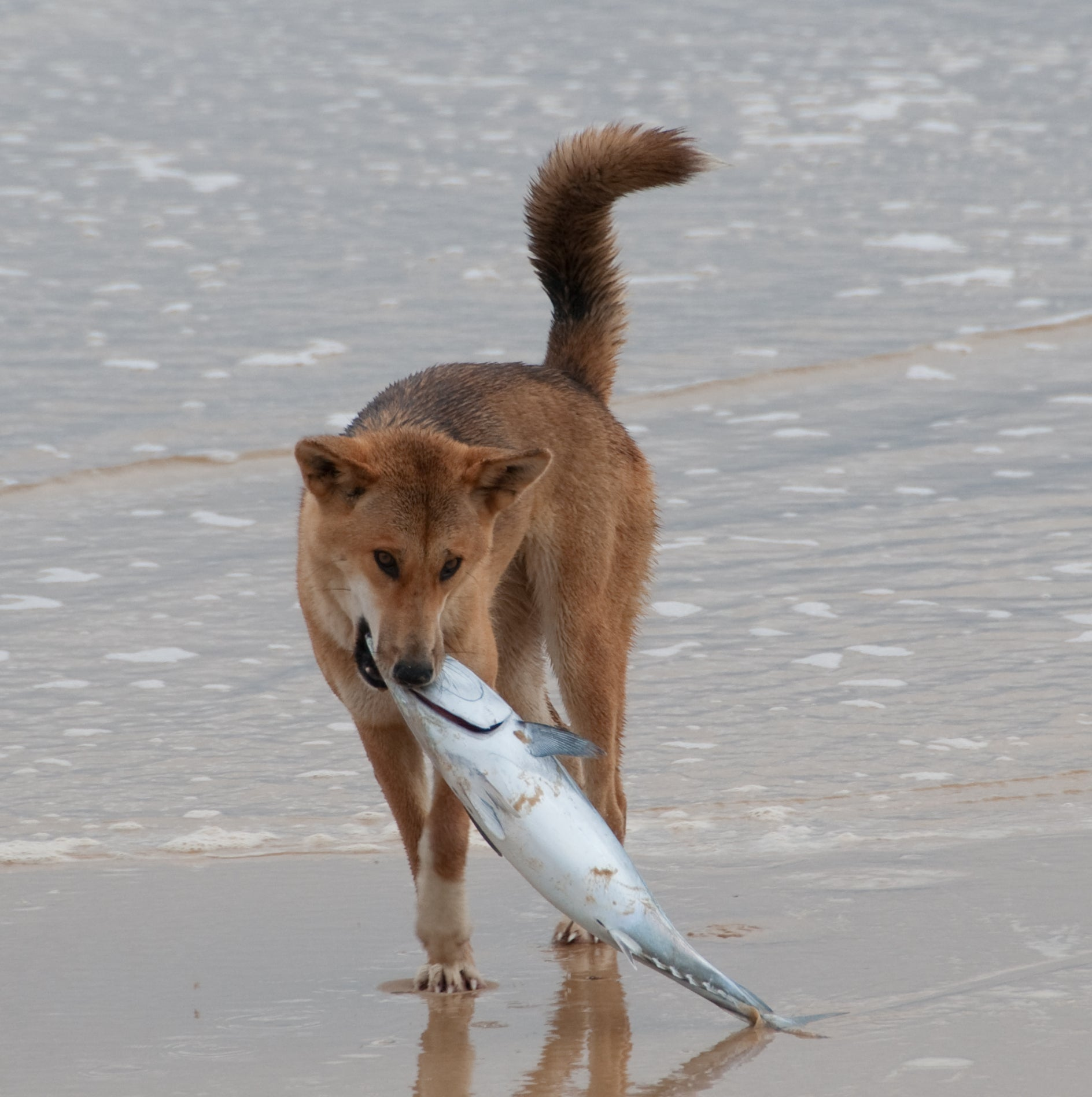raw fish unhealthy for dogs