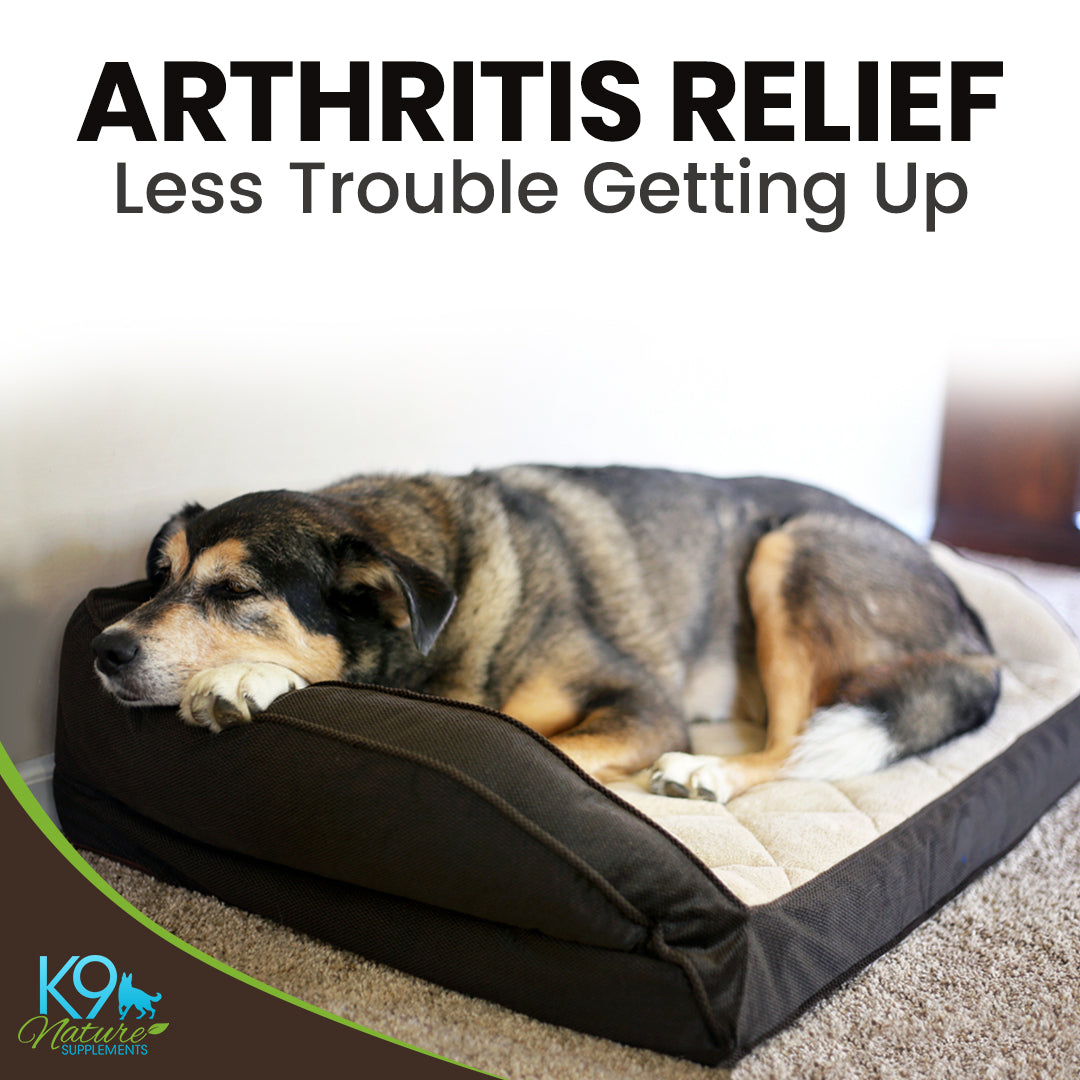 arthritis-pain-relief-for-dogs
