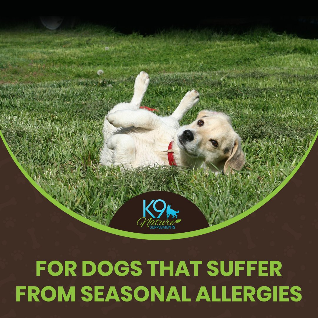 ALL-CLEAR DOG ALLERGY SUPPLEMENT 3 Pack 25% OFF