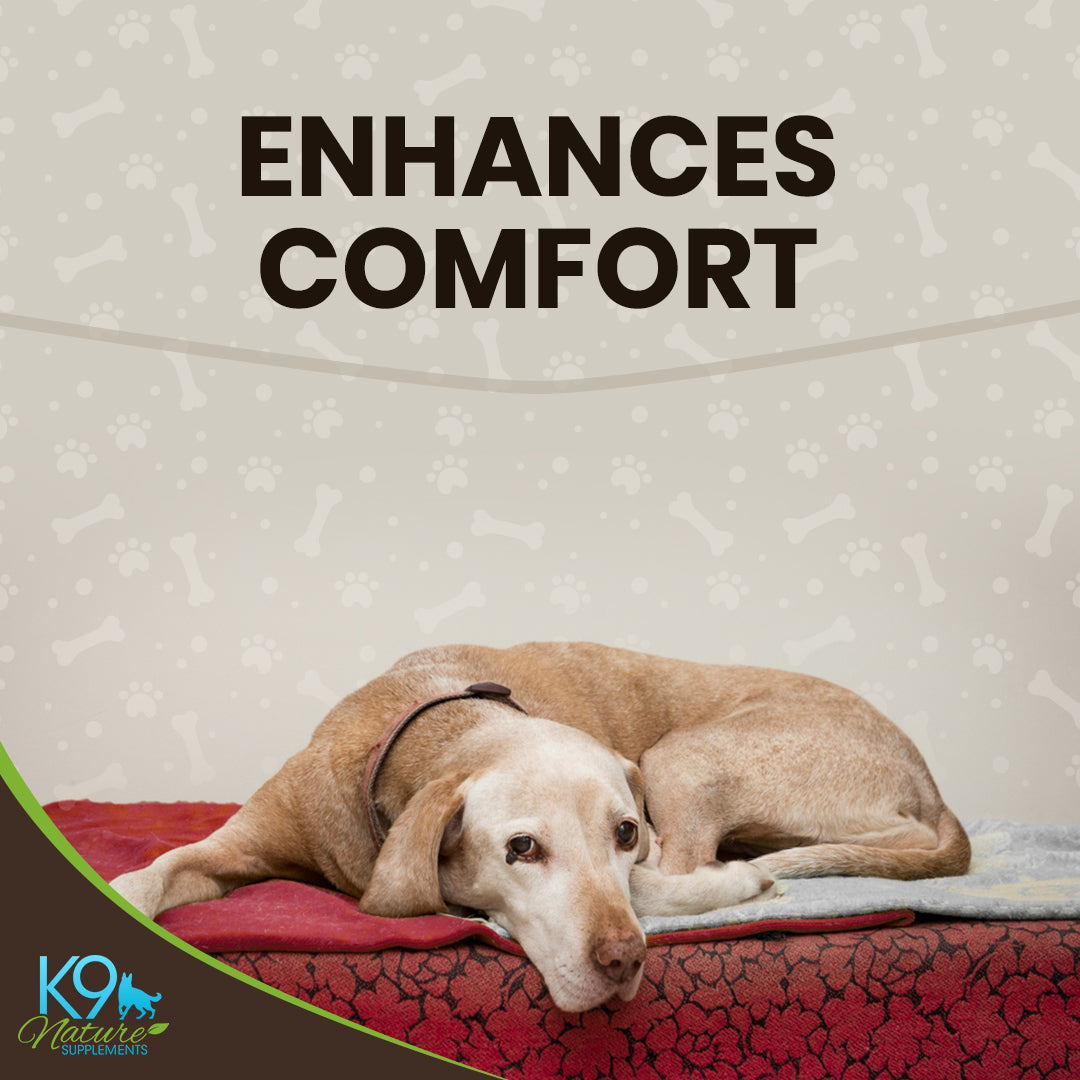 dog-pain-relief-enhances-comfort
