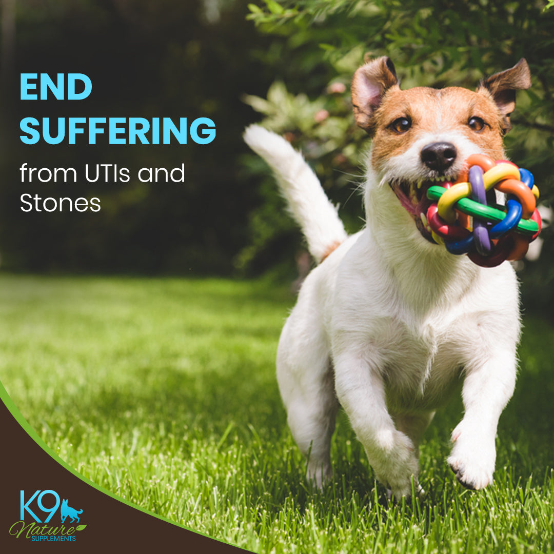 dog uti treatment