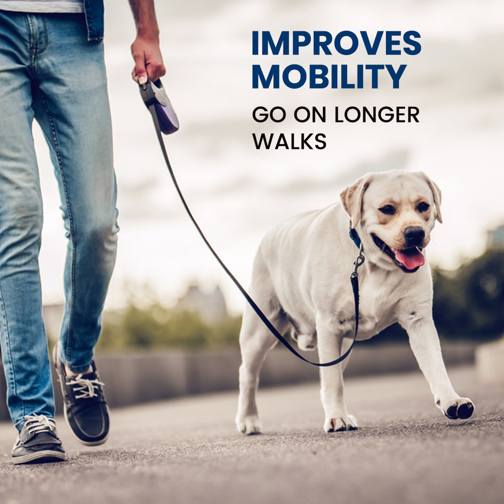 glucosamine-for-dogs-improves-mobility