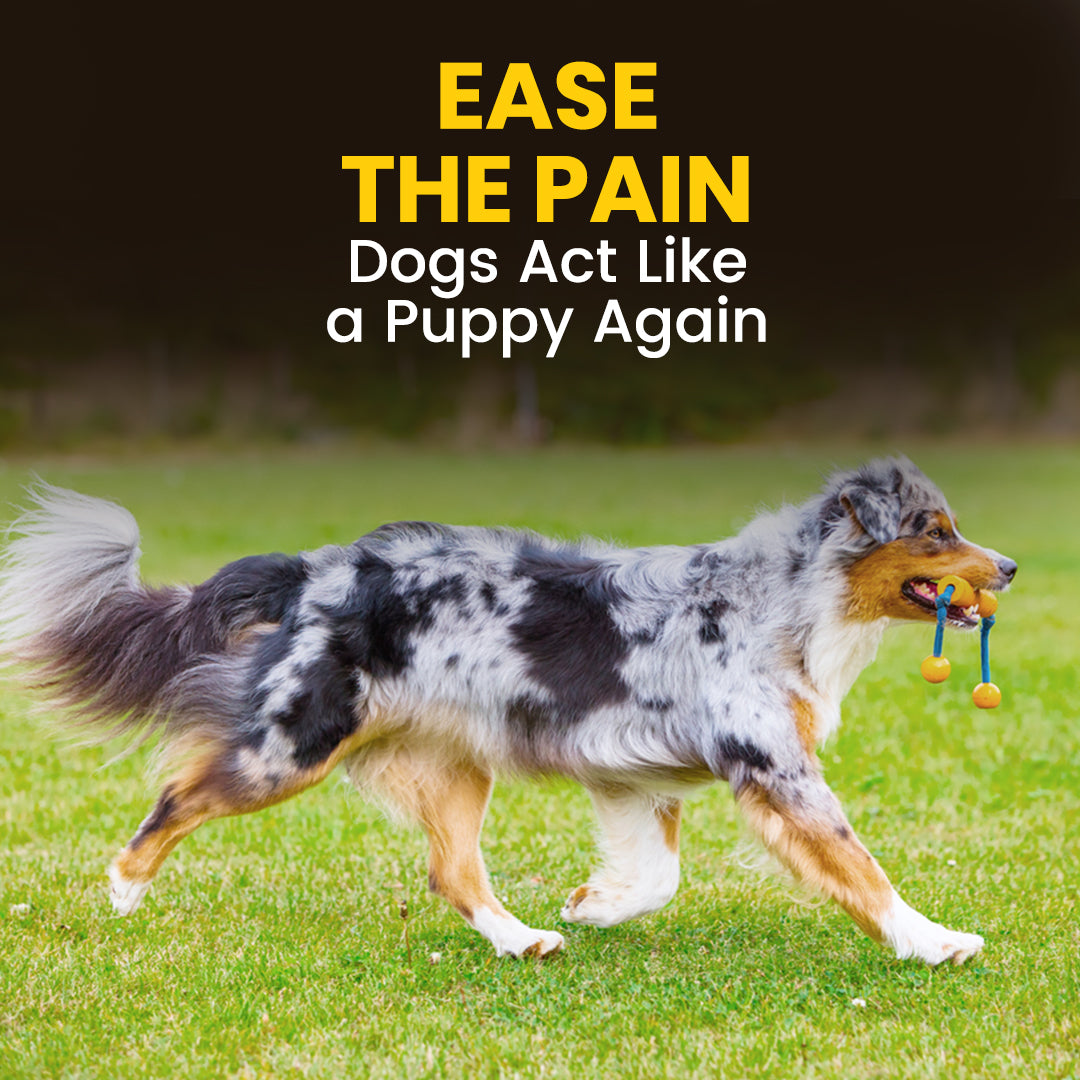 hip-joint-supplement-for-dogs