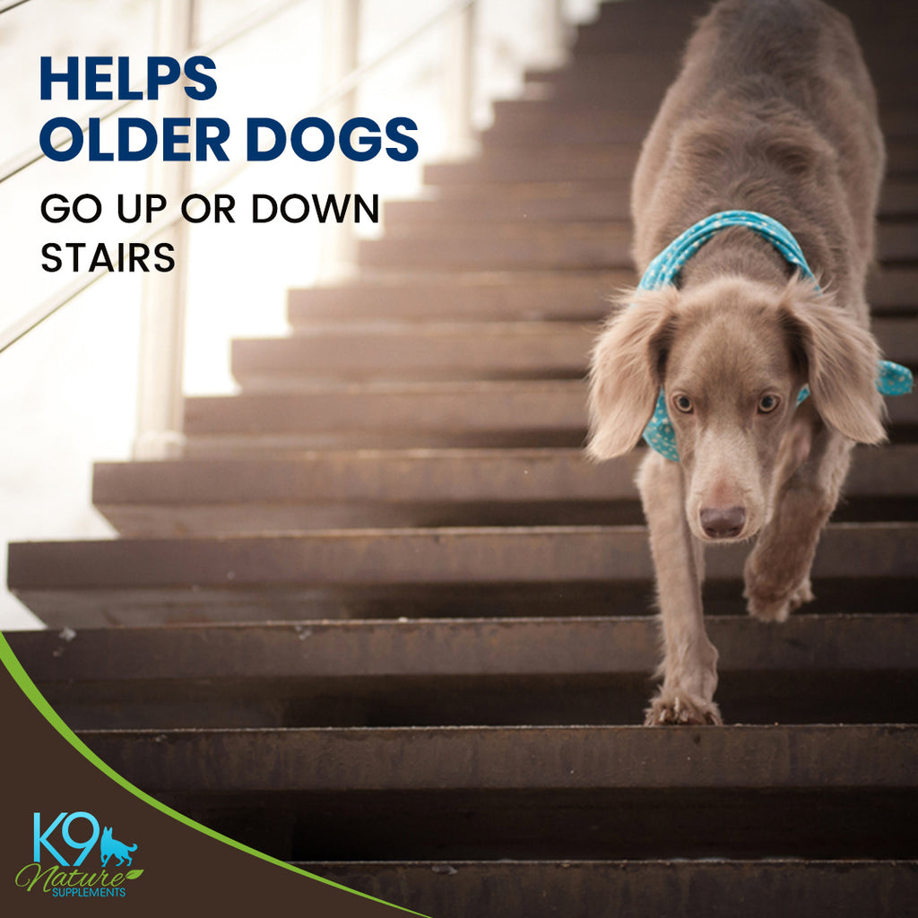 senior-dog-vitamins-for-mobility