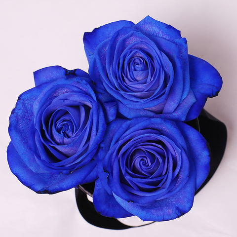 Mille Rose - Mini Box - Rose Blu- Scatola Bianca