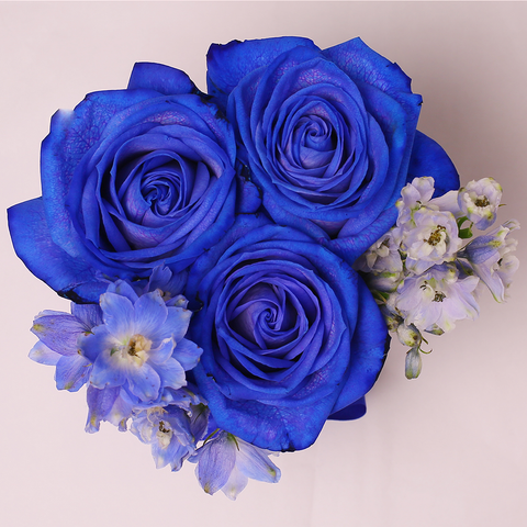 Mille Rose - Mini Box - Rose Blu e Delphinium - Scatola Bianca